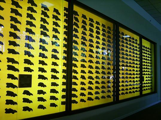 fox skulls at La Brea Tar Pits